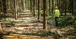 Défiscalisation de 25% pour les propriétaires forestiers