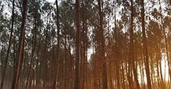 Incendies des forêts méditerranéennes :  les 3 remparts des Forestiers