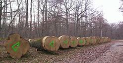 Les coopératives forestières progressent