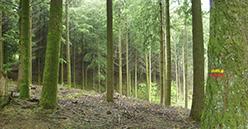 140 parlementaires réclament un «Plan Marshall» pour la filière forêt-bois