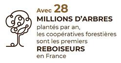Vidéo «Les coopératives forestières, premiers reboiseurs en France»