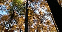 Changement climatique : Les Coopératives Forestières placent l'adaptation des forêts au cœur de leur activité