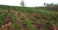 Les coopératives forestières mobilisées, répondent présent à l'AMI renouvellement forestier