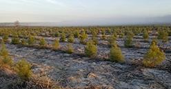 Appel à projets «graines et plants» du Ministère de l'agriculture avec Les coopératives forestières